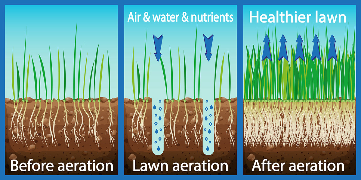 organic lawn aeration and scarification