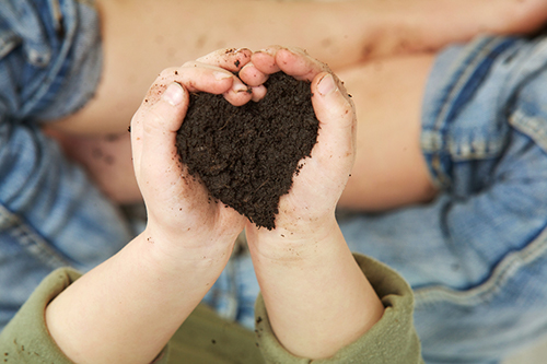 organic based fertiliser treatment autumn
