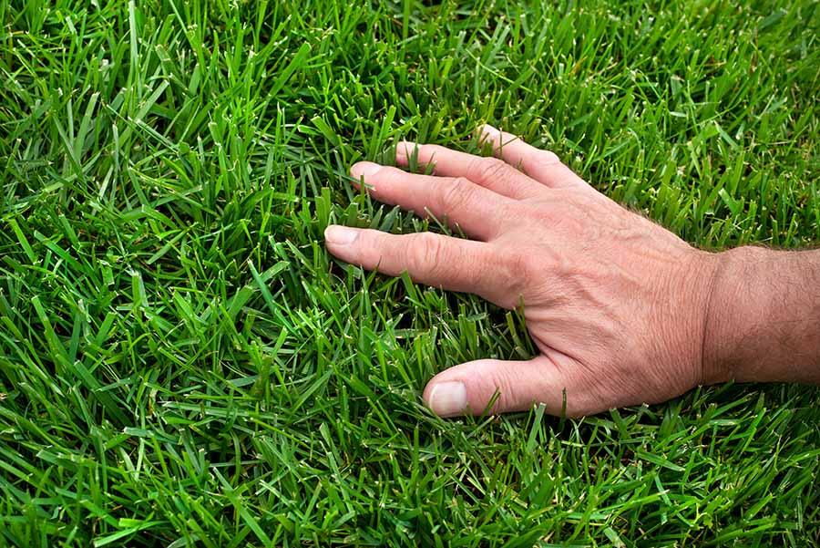 moss organic treatment lawn care
