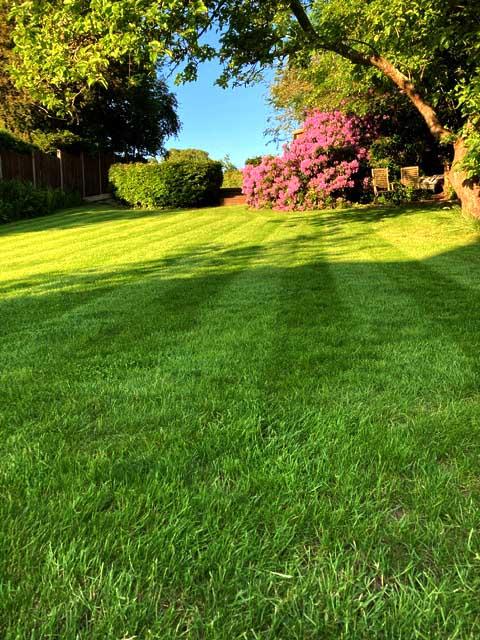 lawn mowing tunbridge wells